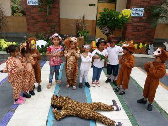 Animal Kingdom Activity